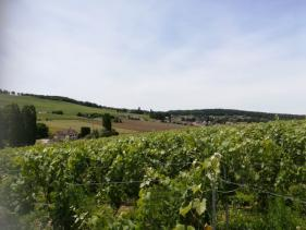 Balade Champenoise : juni '18